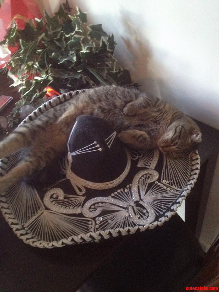 Our Little Purrrito In A Sombrero