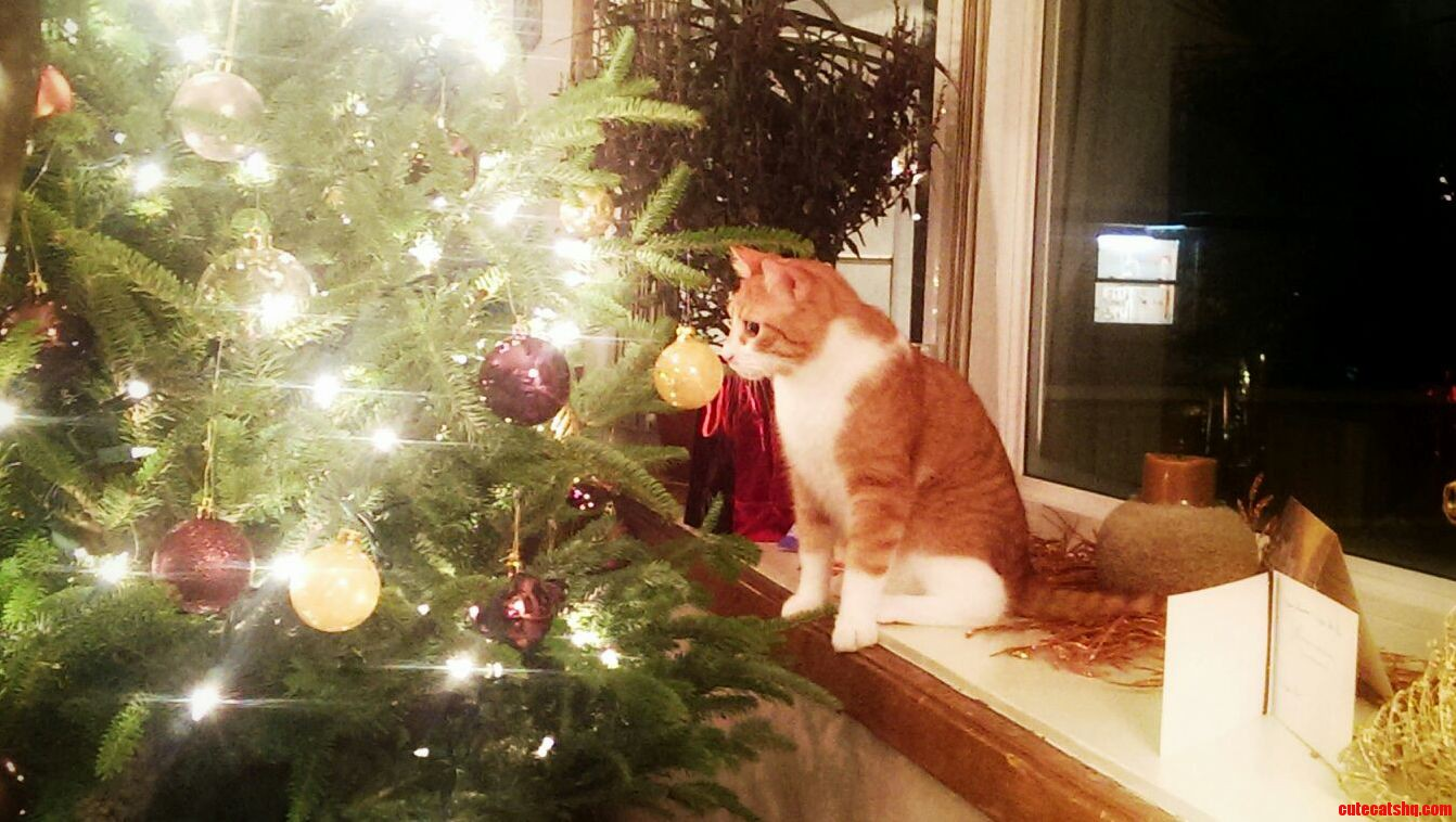Owen Inspecting This Tree Thing
