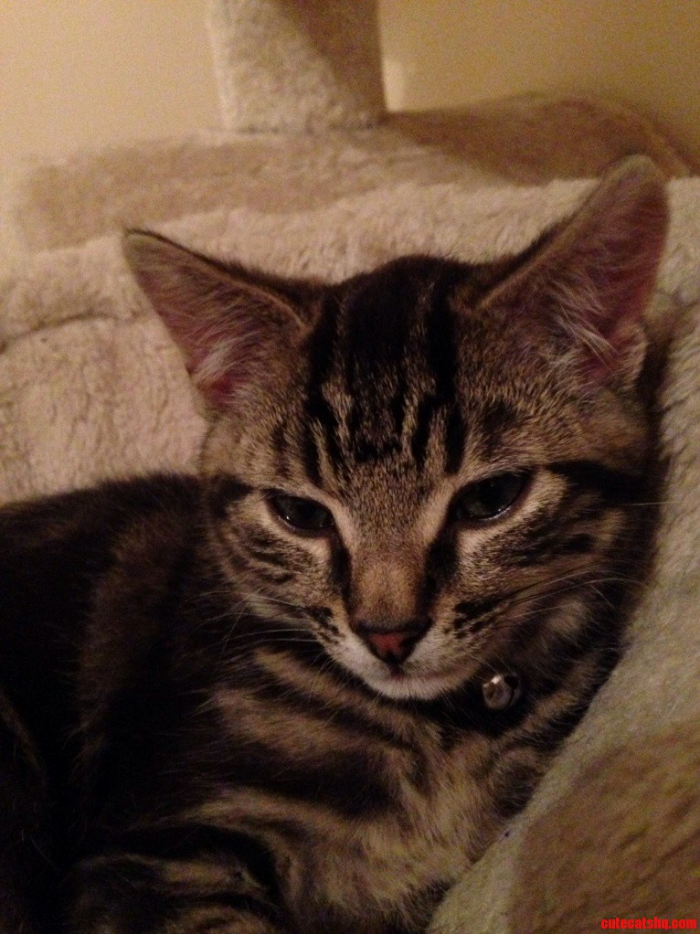 Ozzy Our Rescue Kitten Well Truly At Home Now.