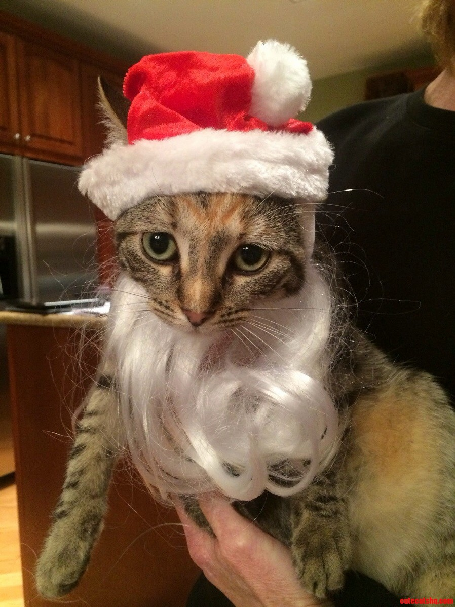 Patches The Santa Cat