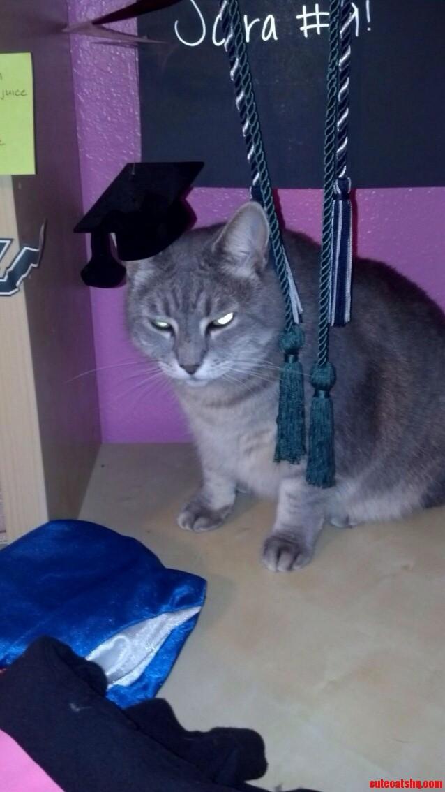 Pissed Off Cat Graduate Edition X-Post Rcats
