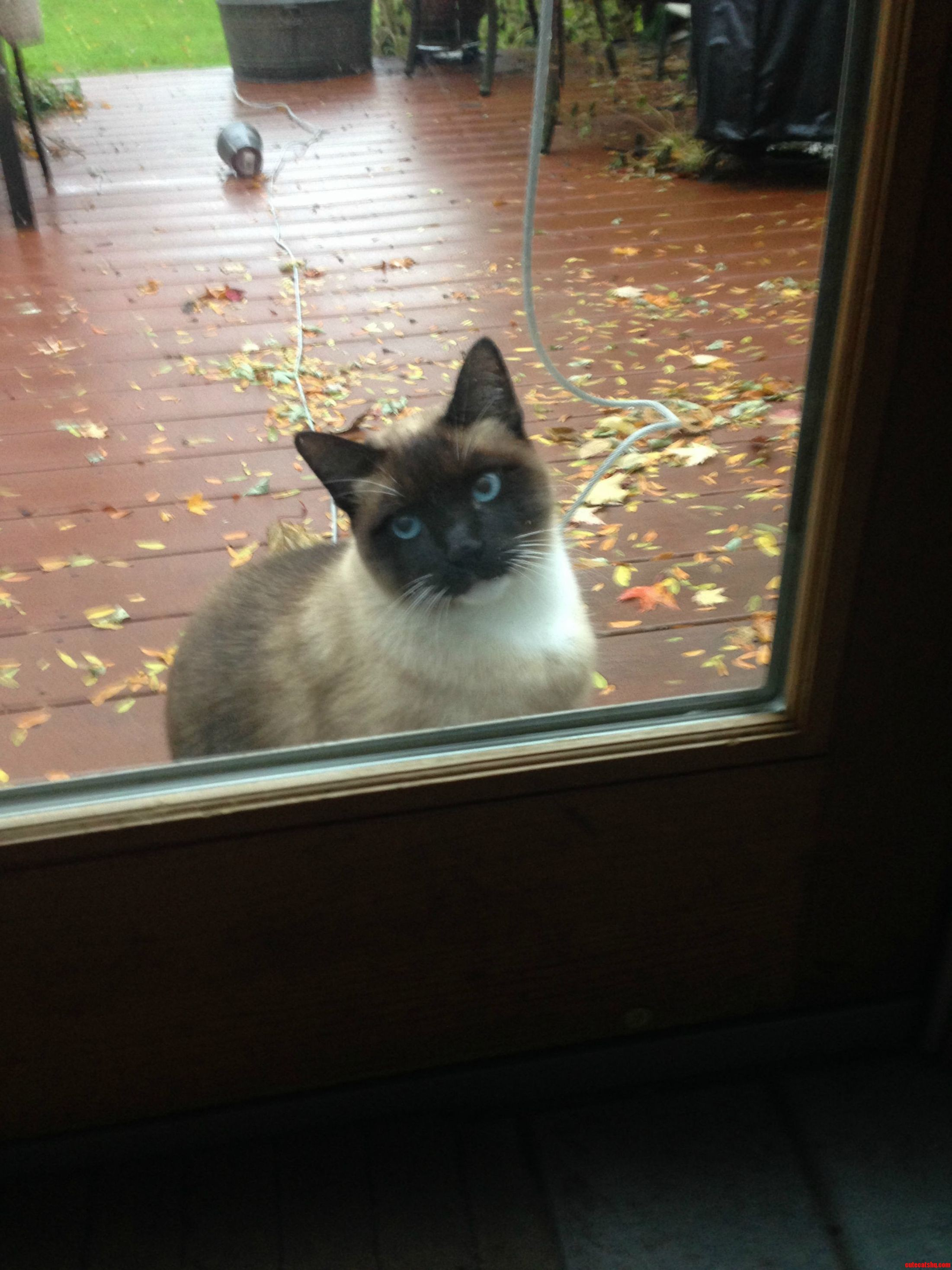 Quit Playing Around. Let Me In.