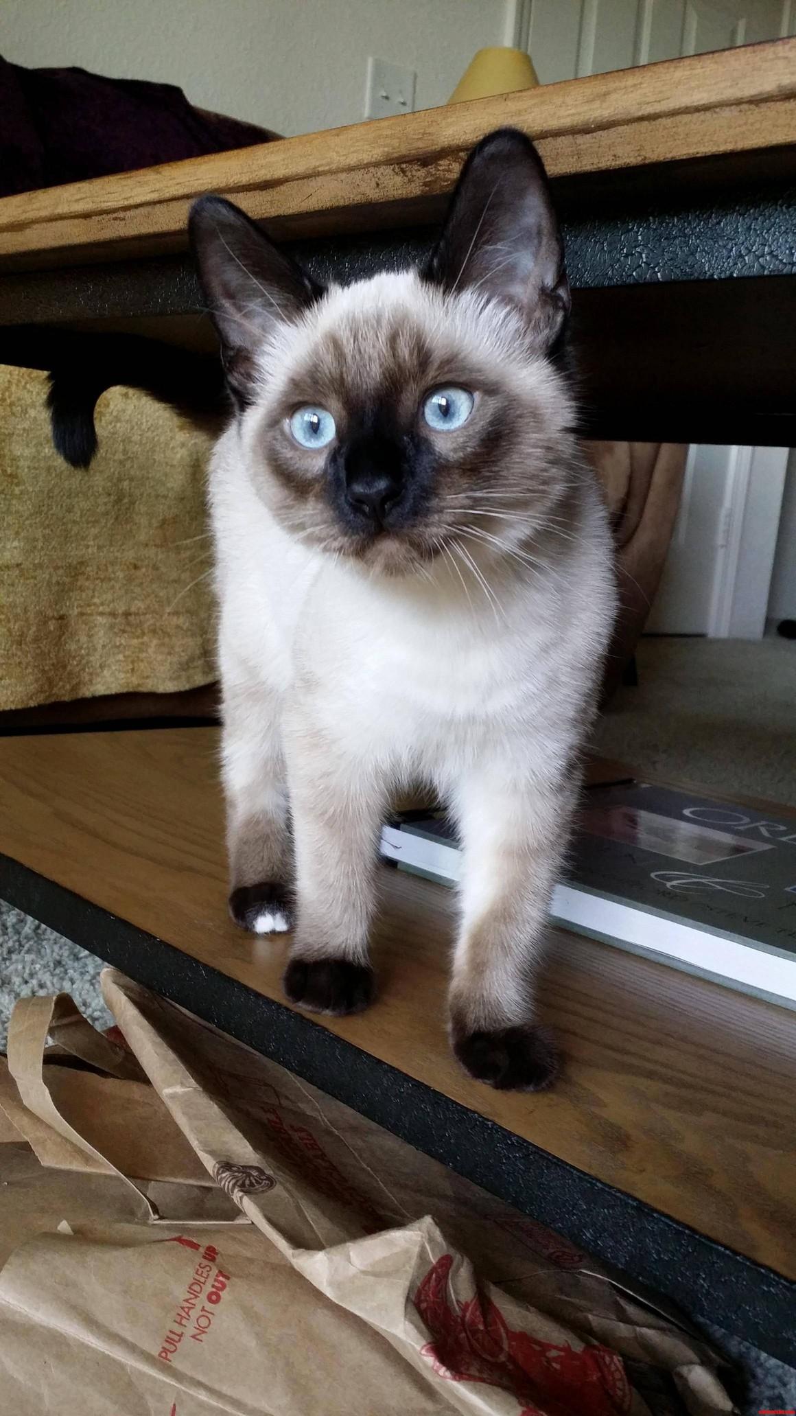 Rosko The Blue Eyed Wonder