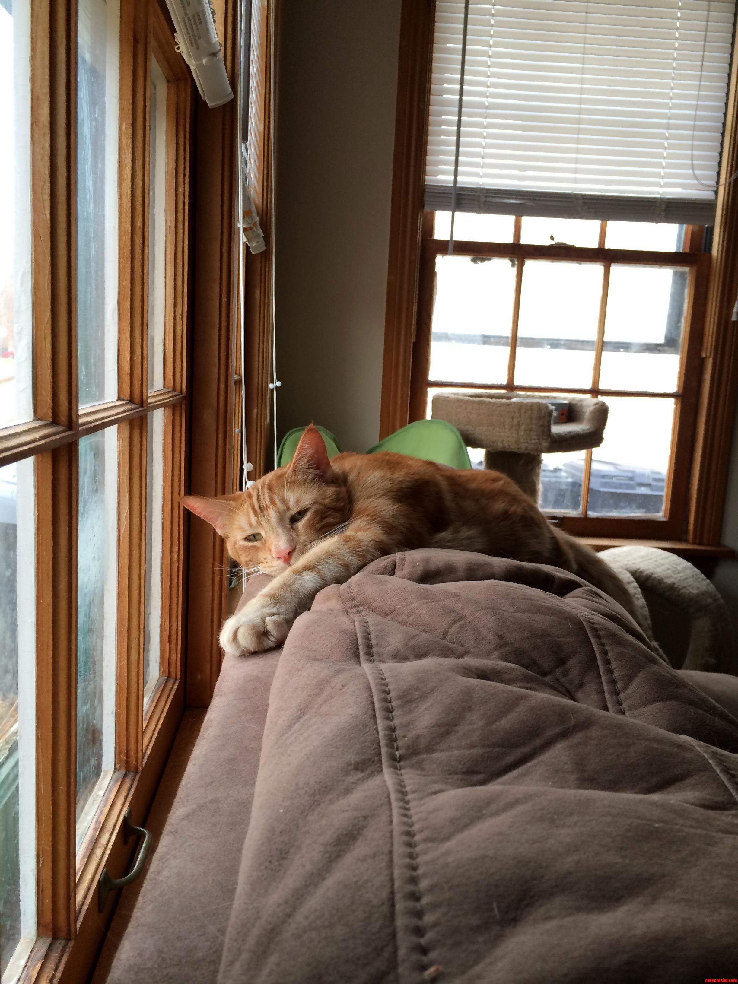 Sad Cat Diary… Johnnie Has A Rough Life