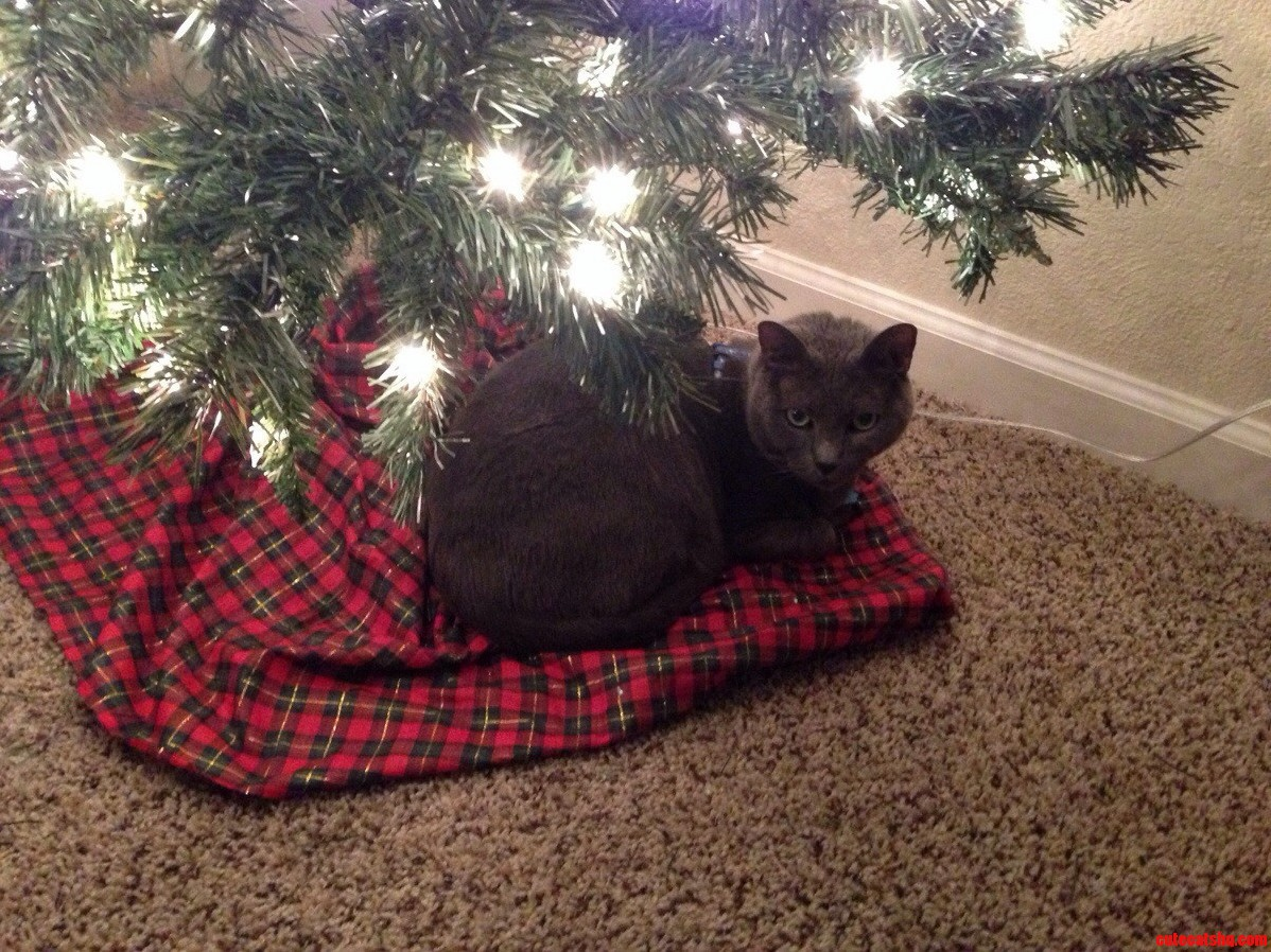 Seconds Later He Knocked The Damn Tree Over. This Is His Plotting Face. Also Known As Everyday Face.