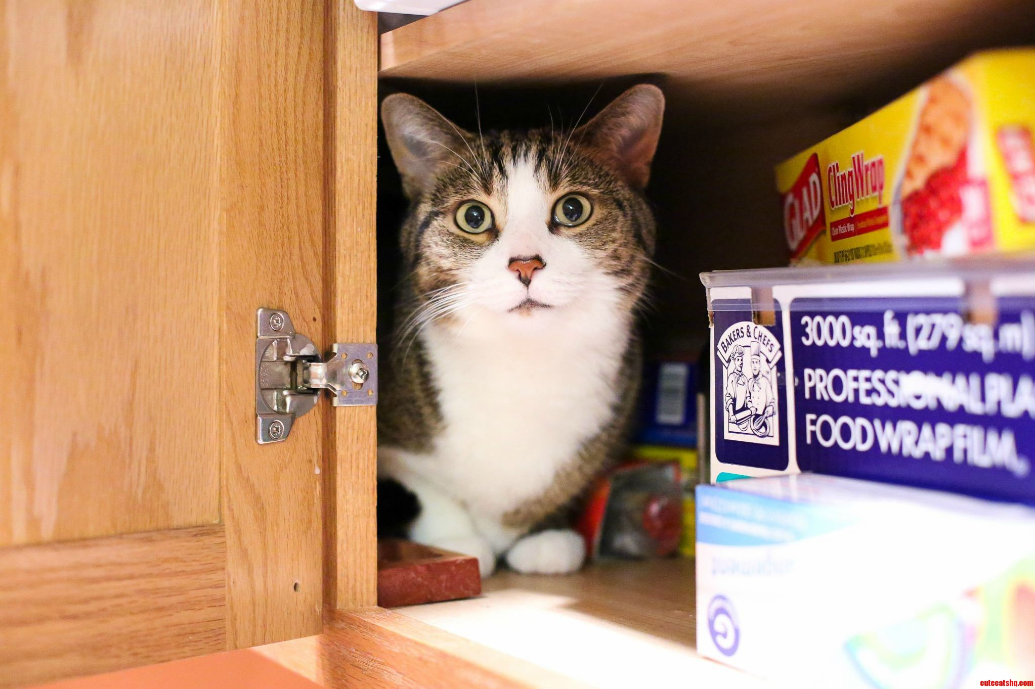 She Likes To Squeeze Into Cabinets. Doesnt Matter How Much Stuff Is In The Way.