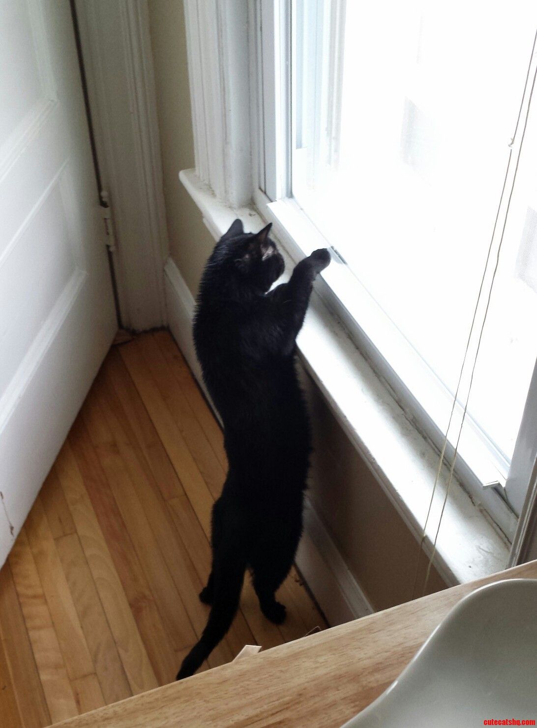 She Was Trying To Get The Snow On The Window