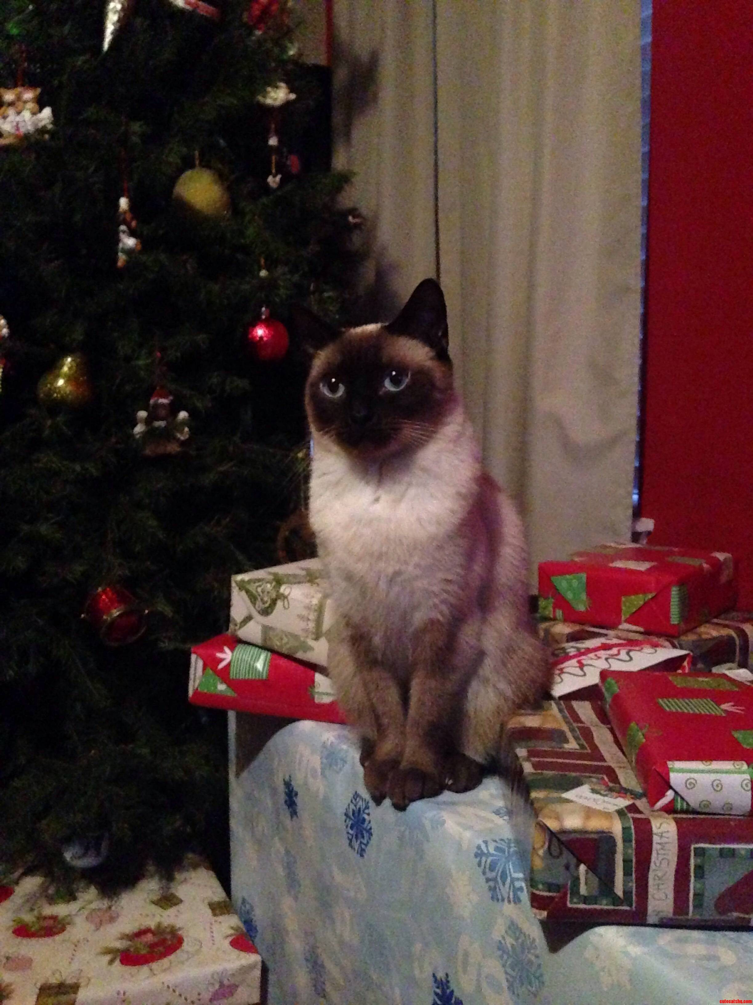 Shes Guarding The Presents.