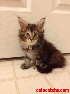 Shes So Fluffy Im Gonna Die X-Post From Raww