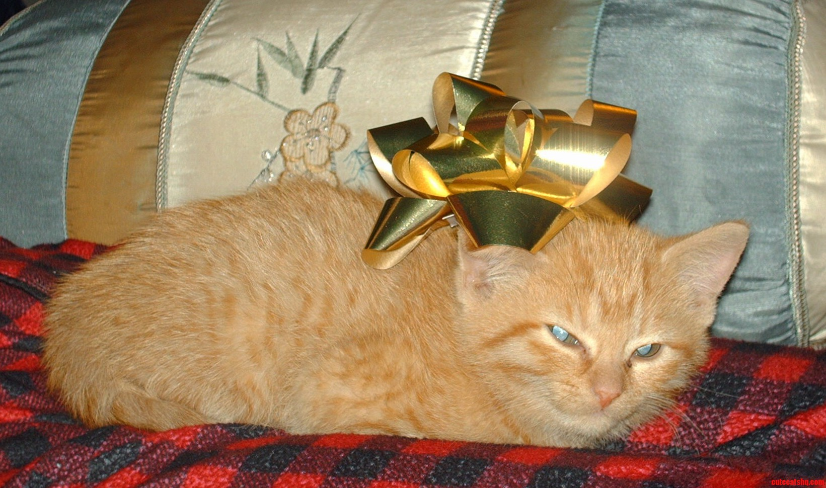 Smug Baby Peaches Wrapped Up In Bows