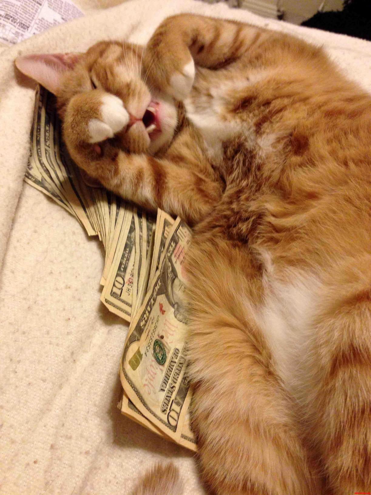 Snacks Scrooge Mcducks All Over My Xmas Bonus