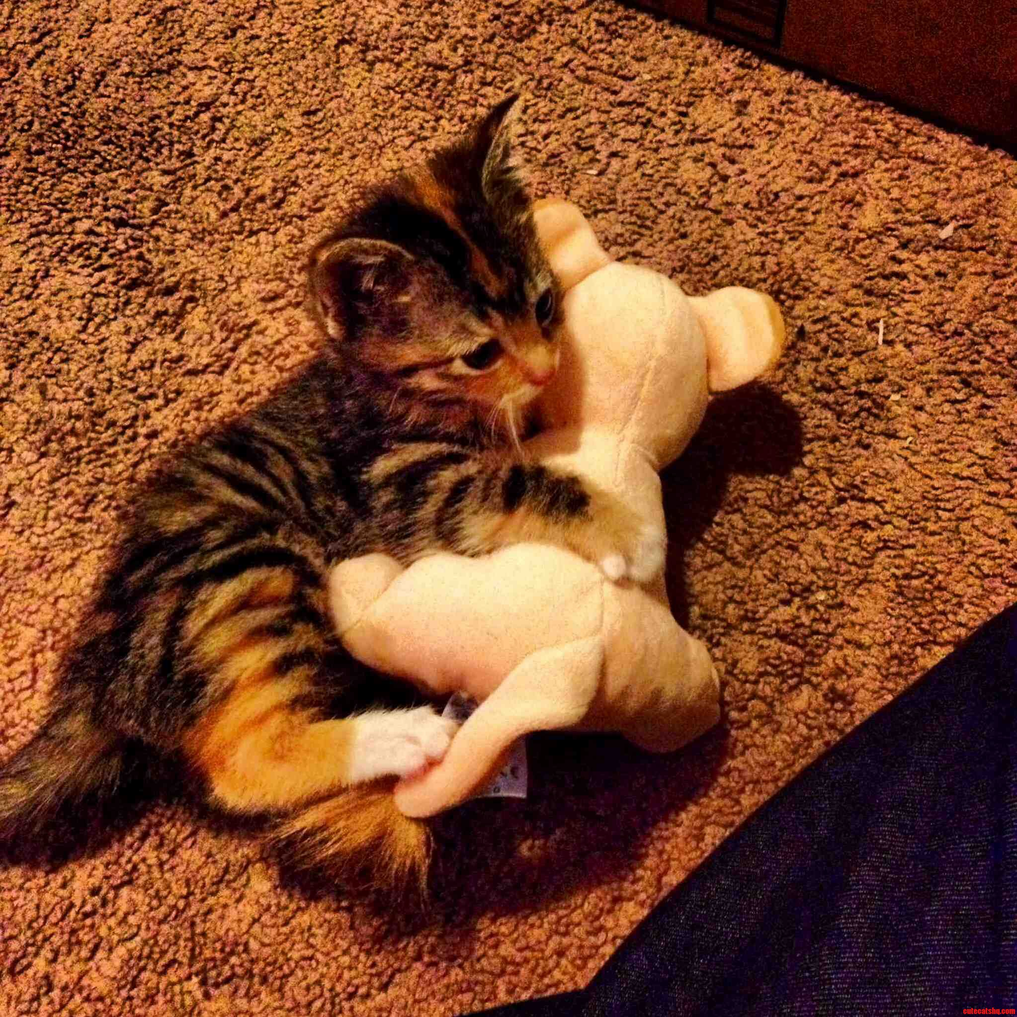 So I Got My Cat Nala A Stuffed Animal Nala And She Is Obsessed With It