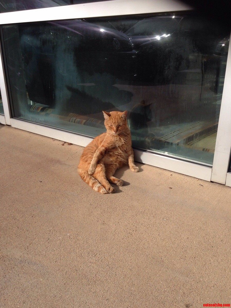 Stray Cat Likes To Hang Around Our Dealership. We Named Him Orange Hes Hilarious