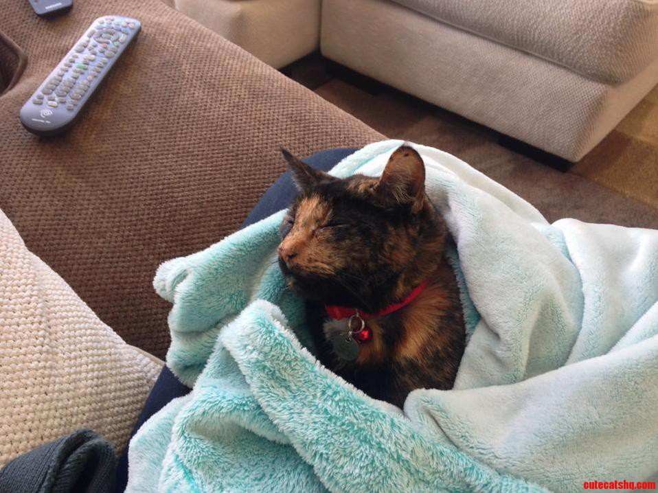 Swaddled Cat Time