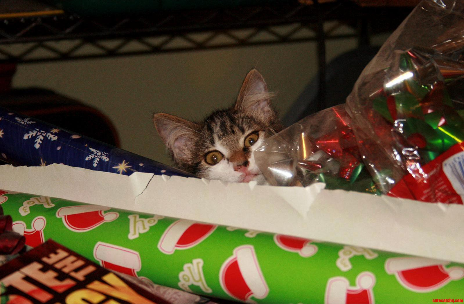 Tabitha Is Helping Me Wrap Presents.