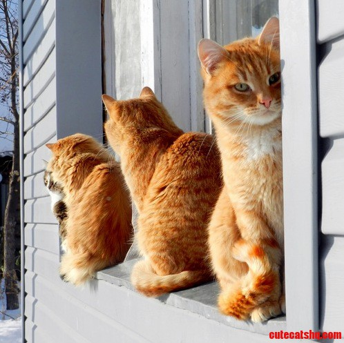 The 4 Cats Sit On The Window