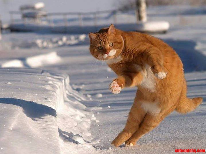 The Dancing Cat.