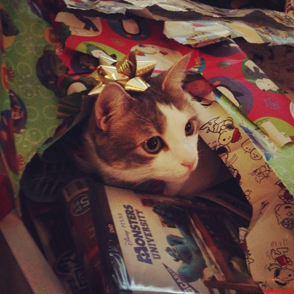 The Great Christmas Kitty