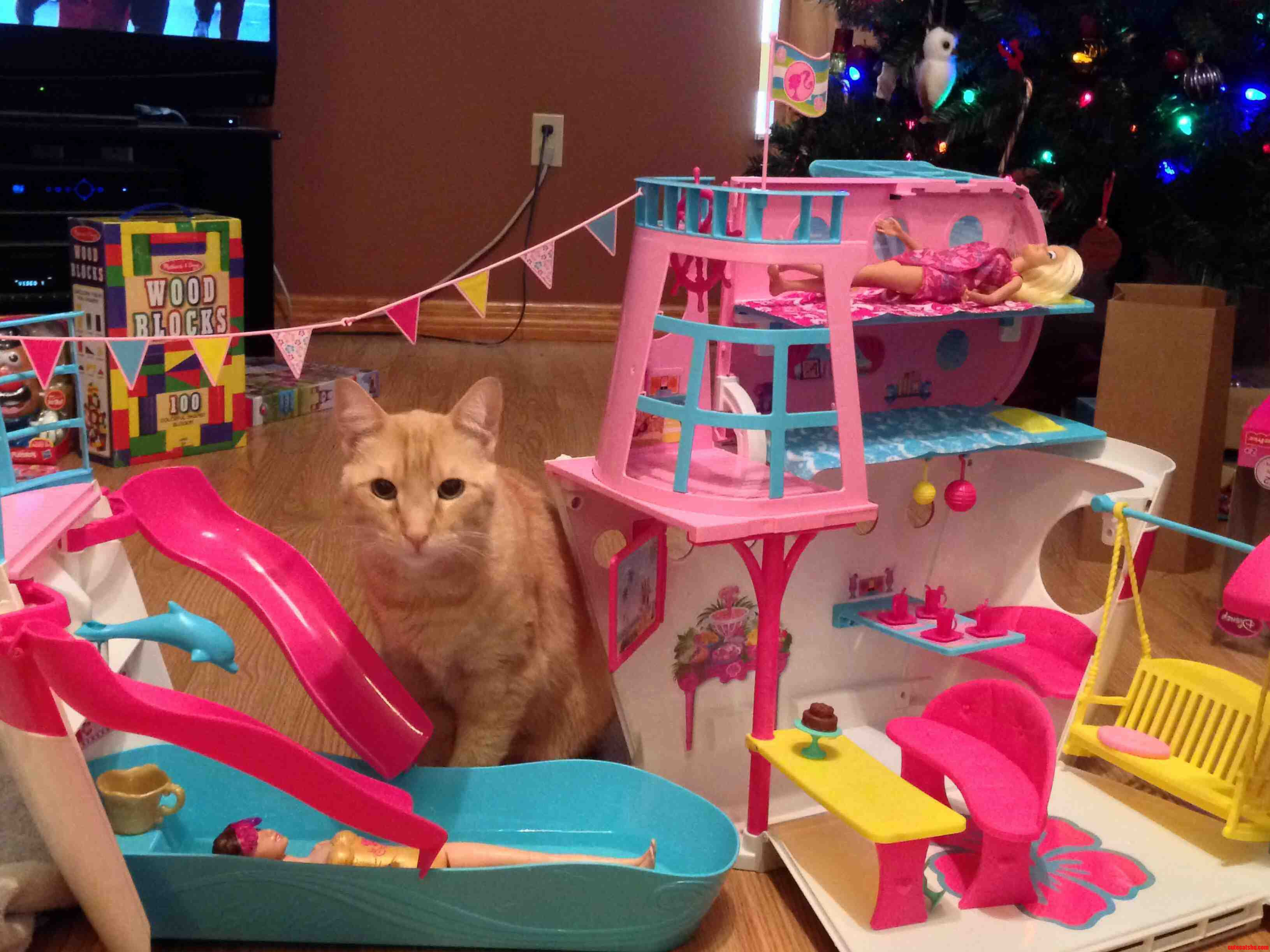 Tiger Is Having More Fun Playing With Barbies Cruise Ship Than His 6 Year Old Human.