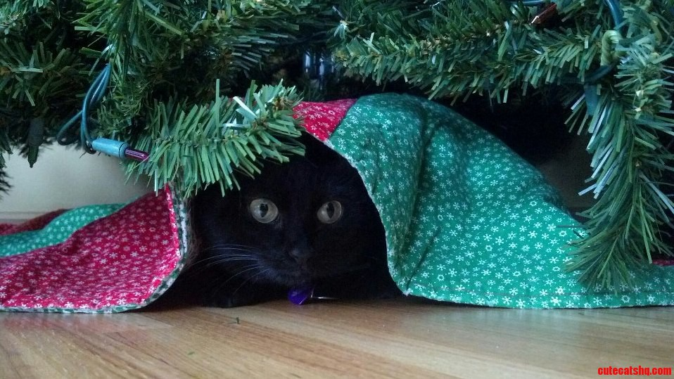 Toothless Is Plotting Her Attack On The Christmas Tree.