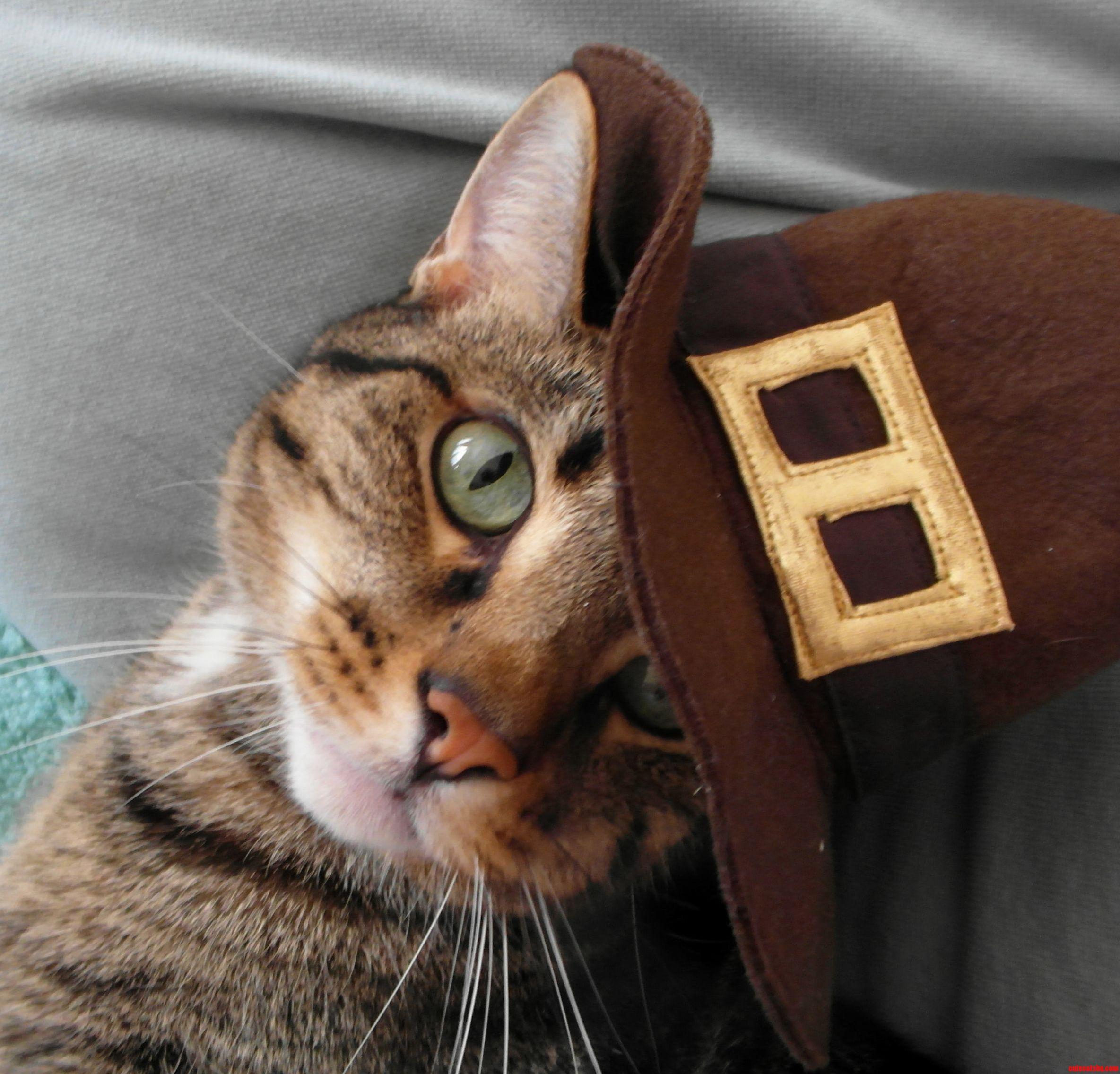 Very Handsom Pilgrim