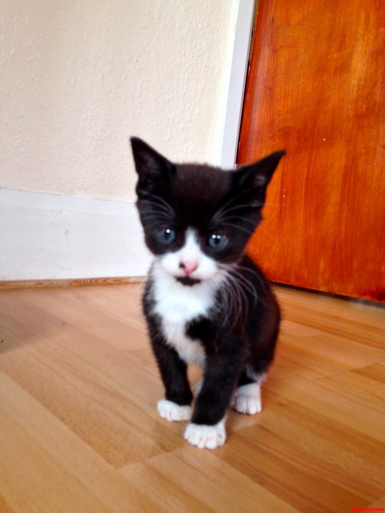Vincenzo The Kitten Mr Miyagis Forgotten Offspring