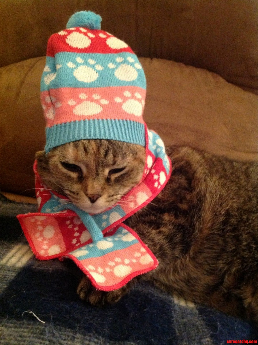 We Got Our Cat A Scarf And Hat