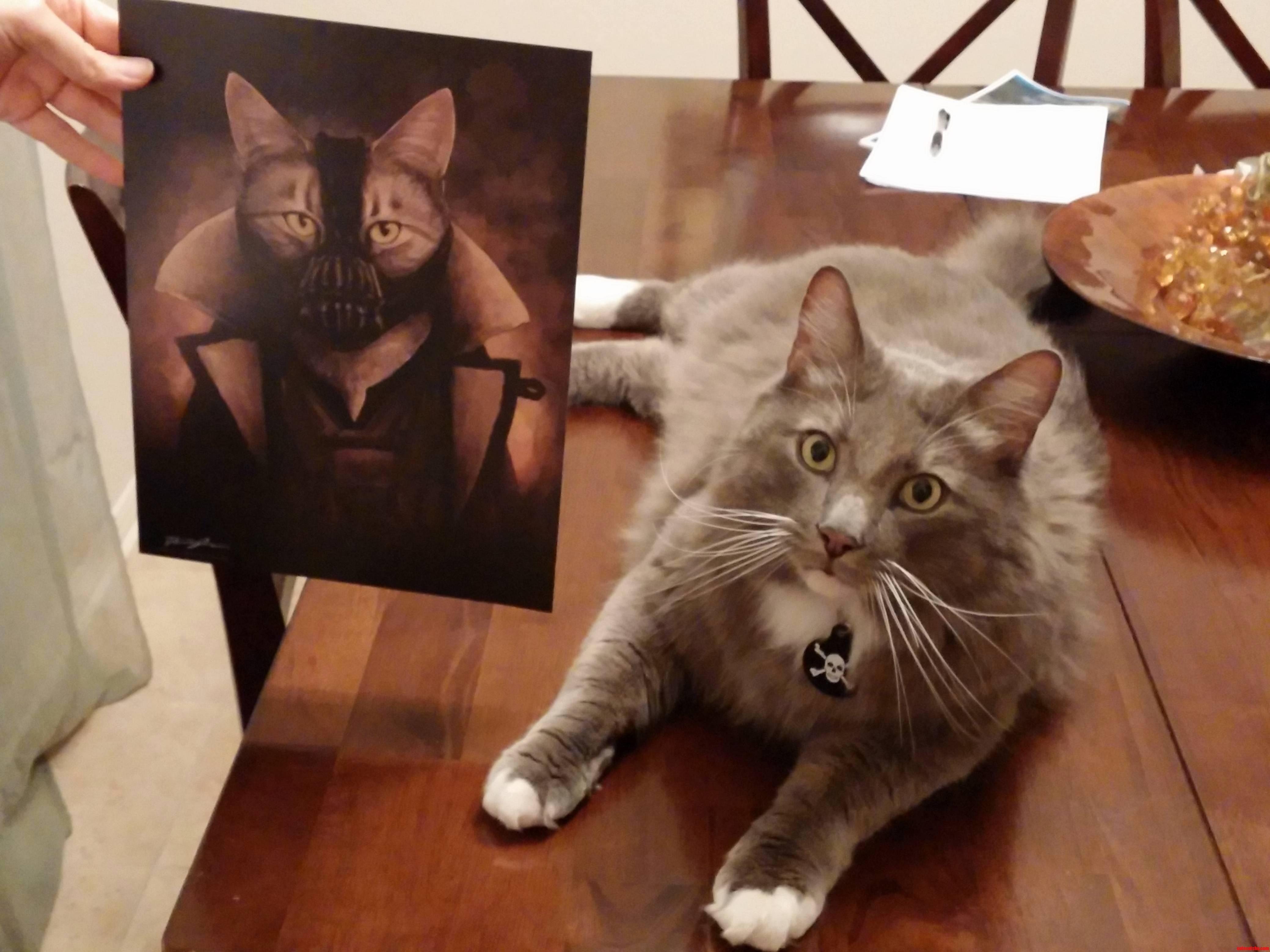 We Often Joke That Our Big Grey Cat Is Built Like Bane