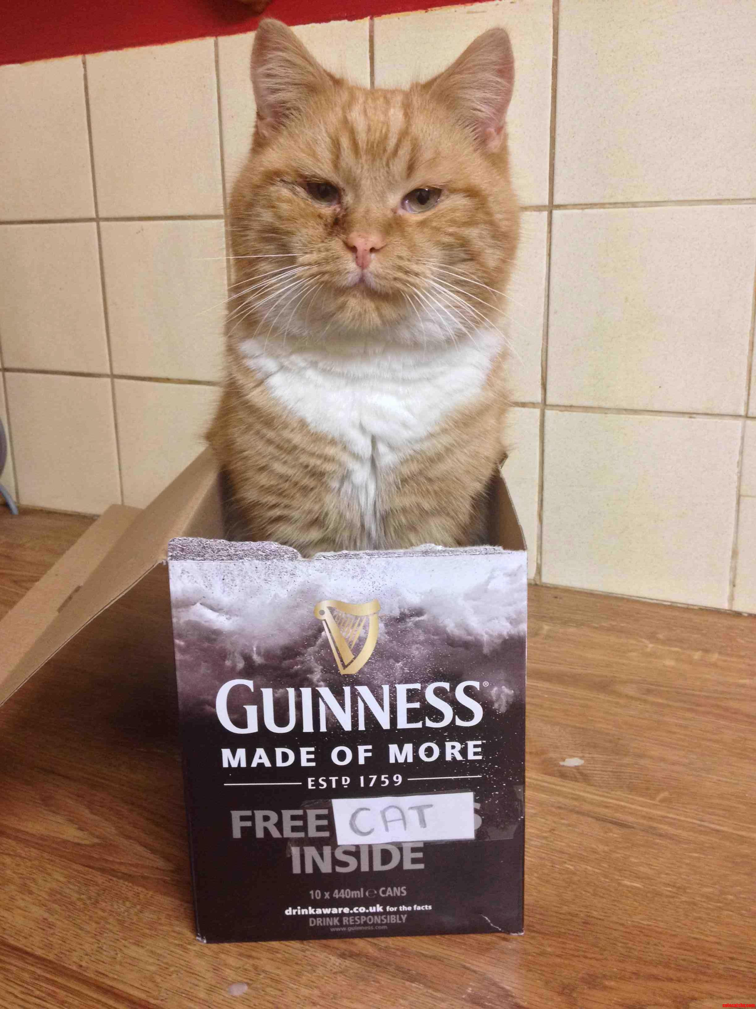 With Every Purchase Of Guinness You Get A Free…