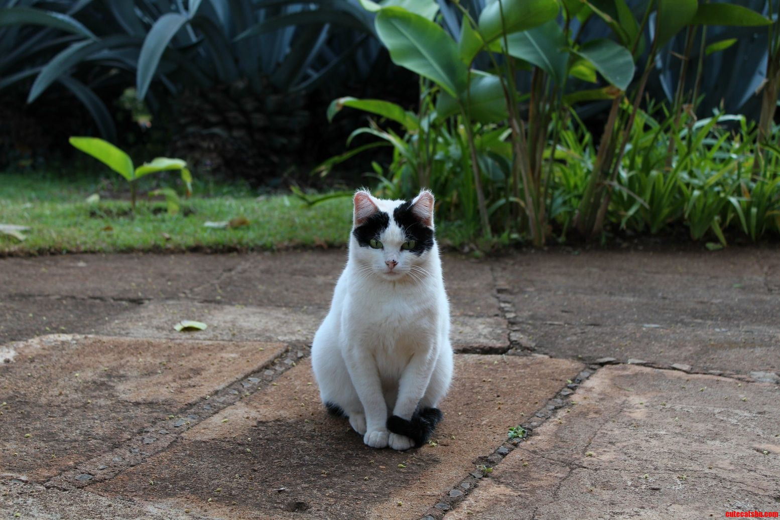 A Beautiful Cat That I Saw In Tanzania.