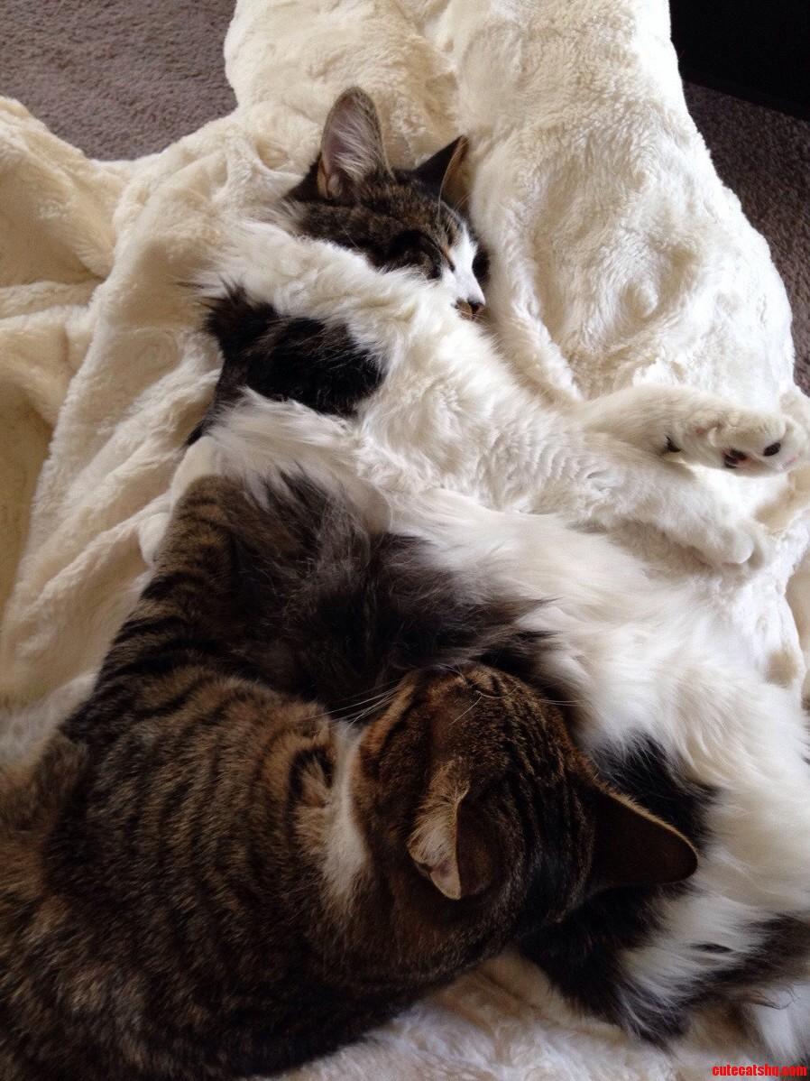At Home Sick…Best Cuddle Buddies Ever.