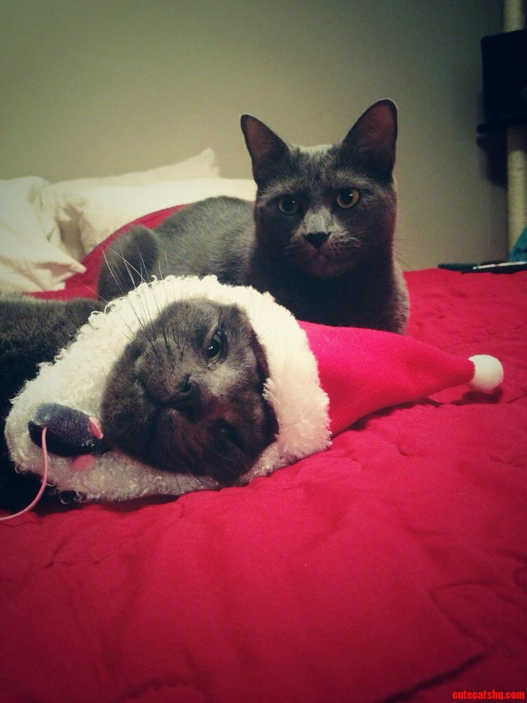 Bender And Meowington Sharing Some Voluntary Holiday Cheer Earlier This Month.