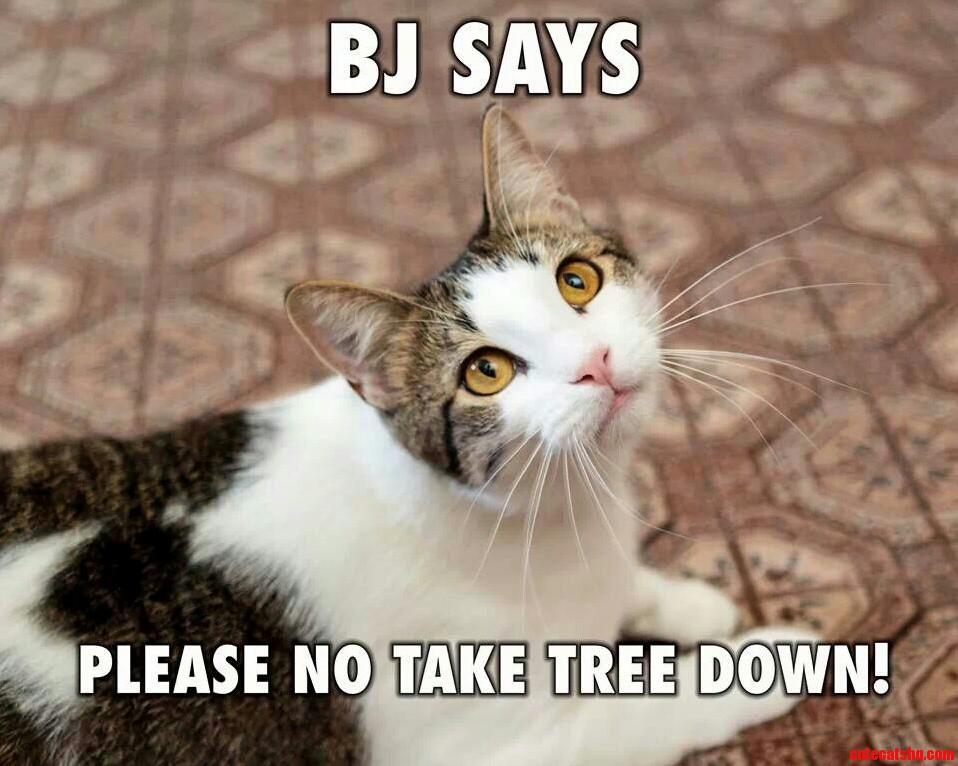 Bj. Says . . .