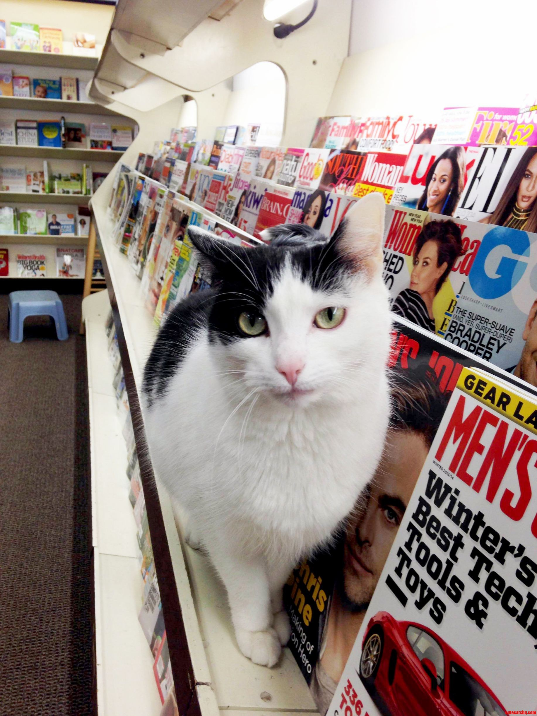 Cat At A Local Bookstore