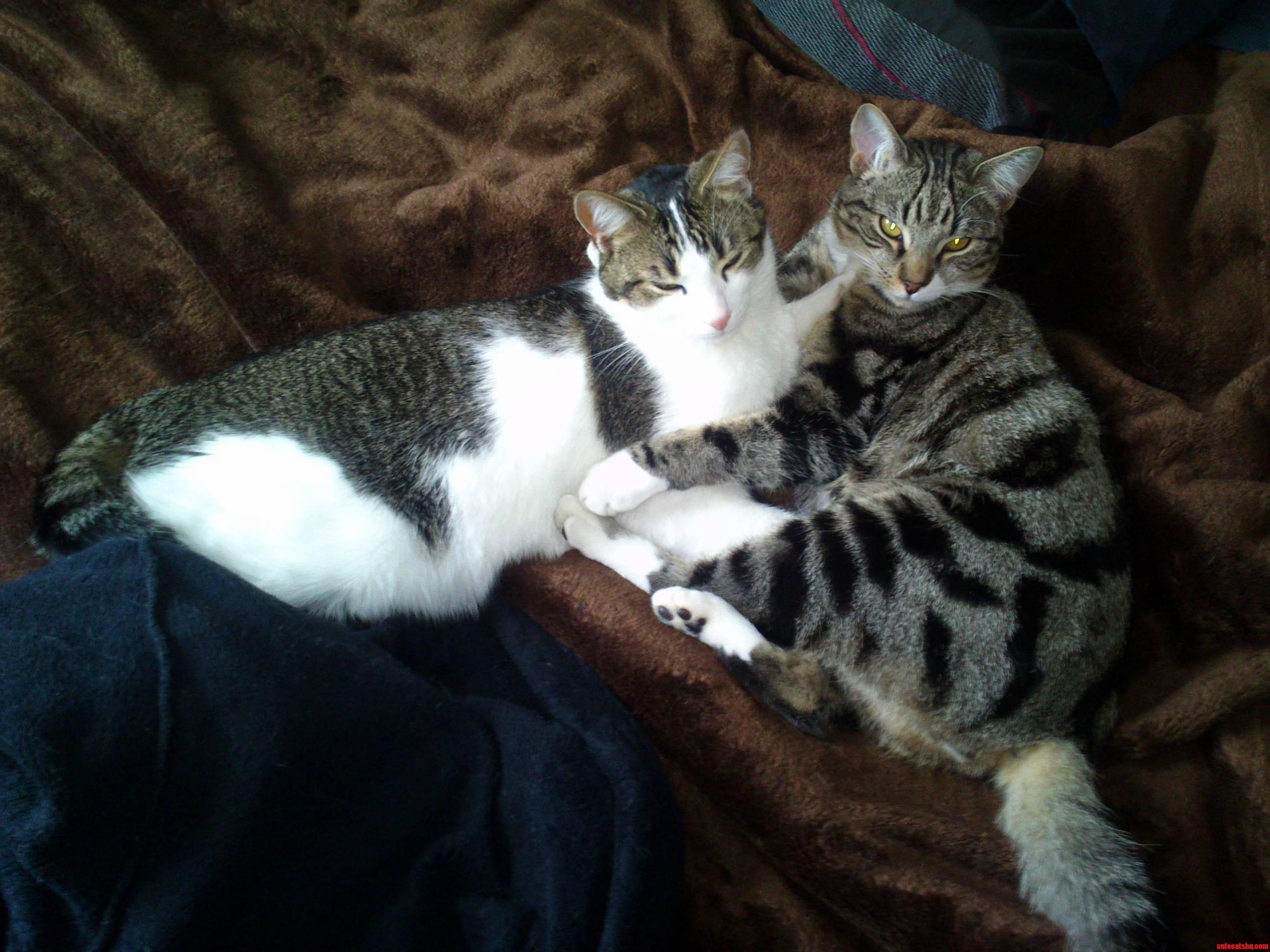 Cuddles kitty