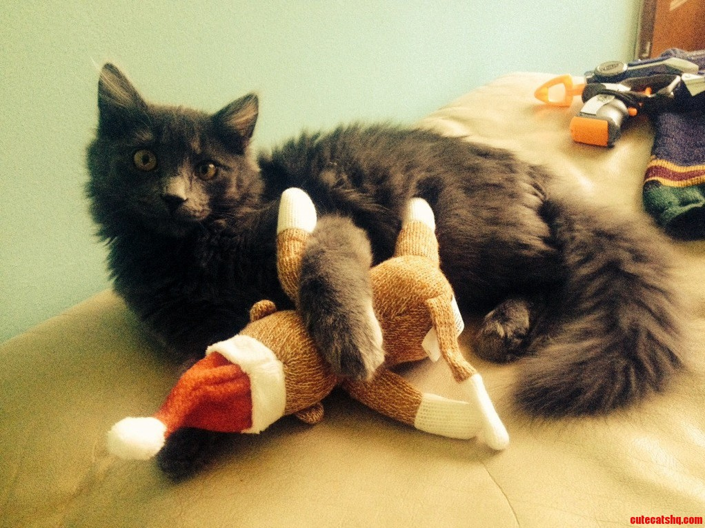 Errol Got A Sock Monkey For Christmas. I Think He Likes It.