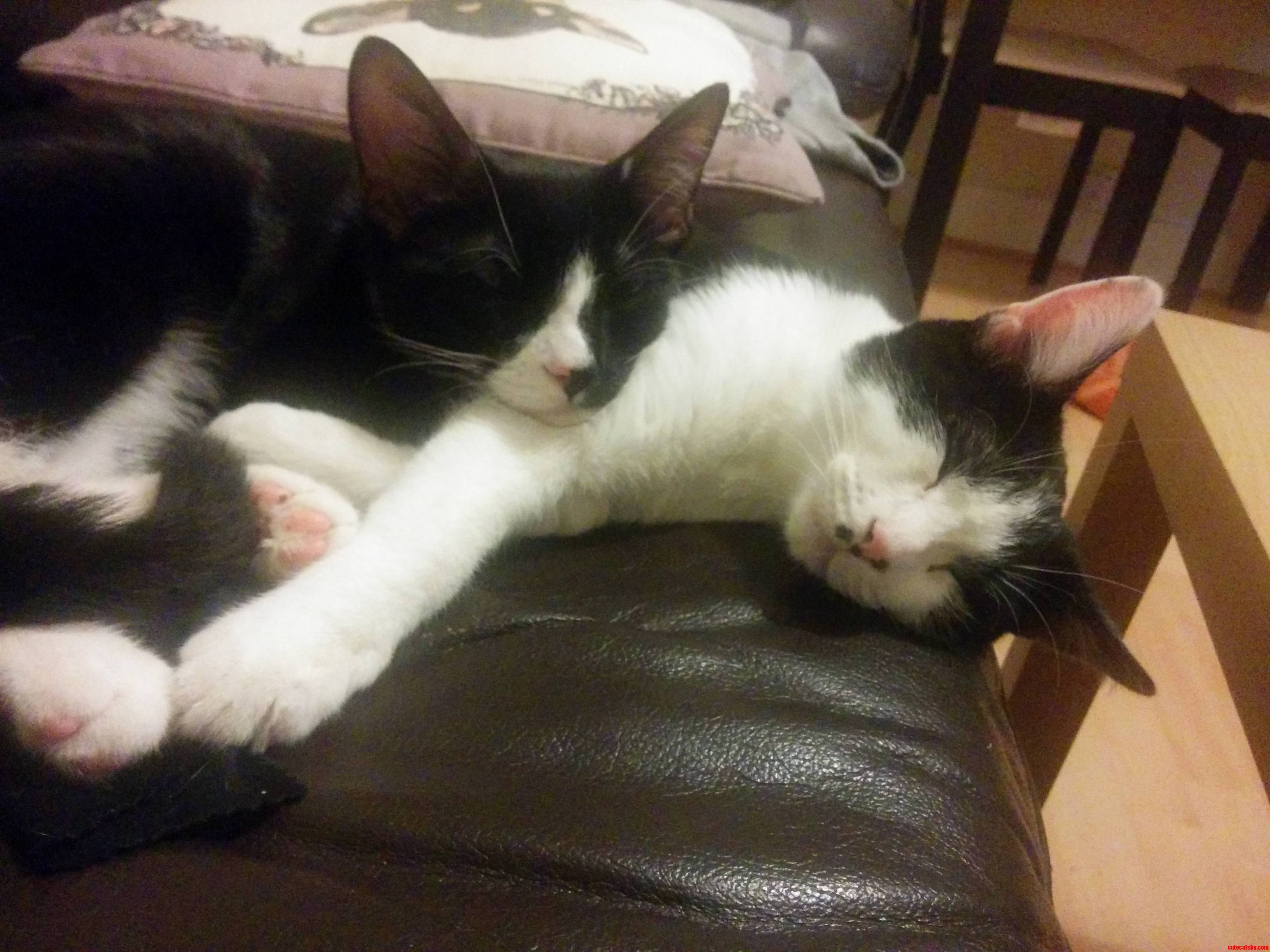 Even After 6 Months They Still Snuggle Up Together On The Sofa