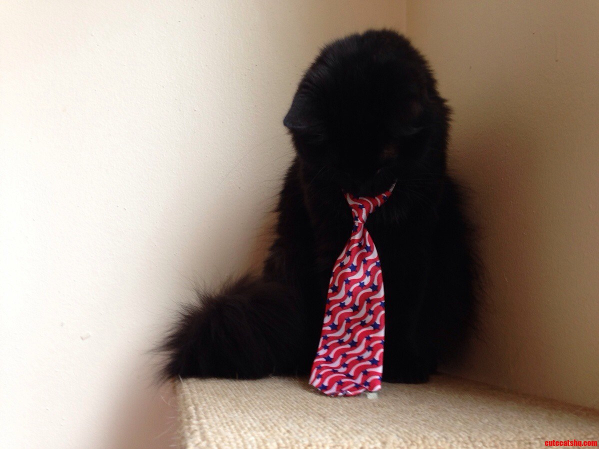 Ford Prefect Pouting About His Tie.