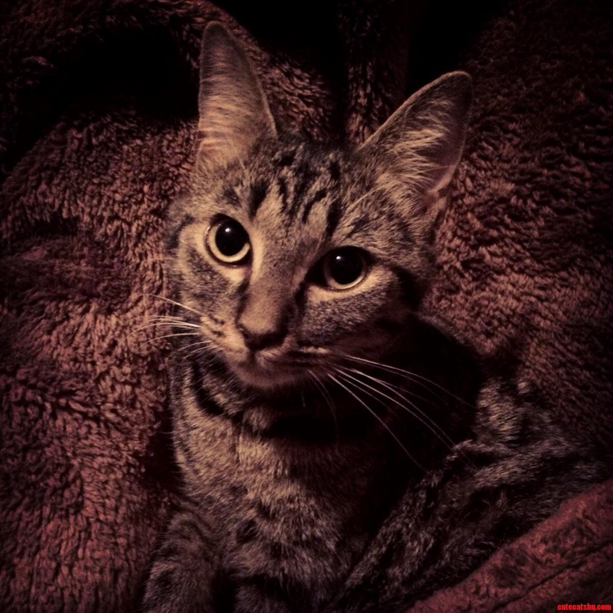 top cat gifs