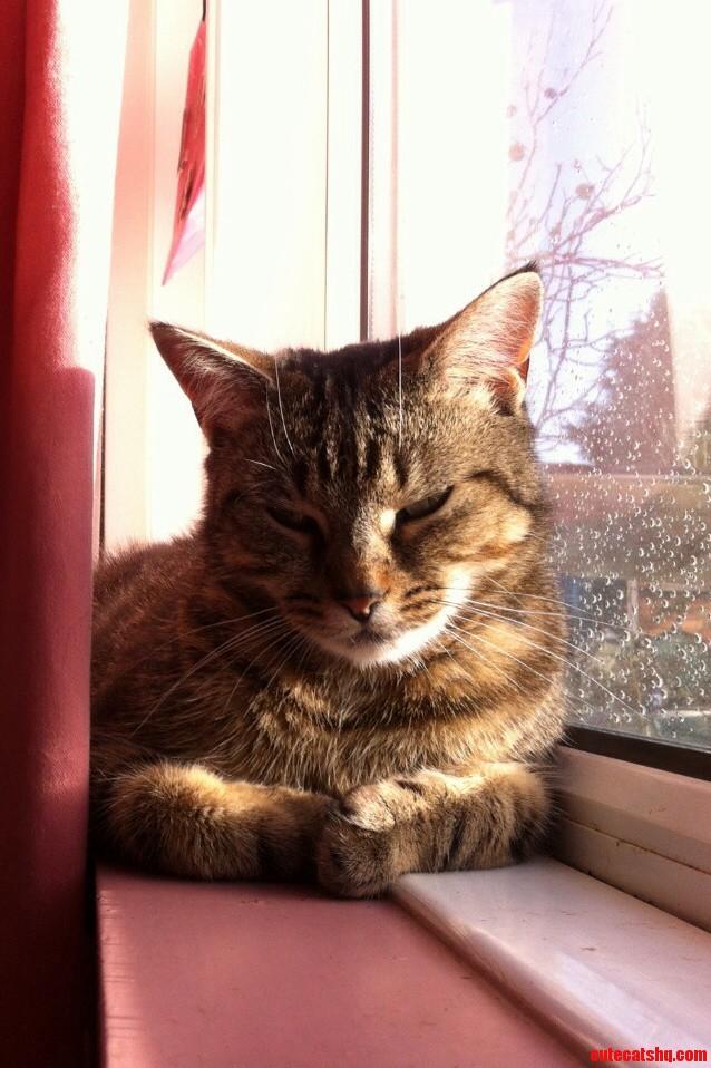 Fudge In The Sun