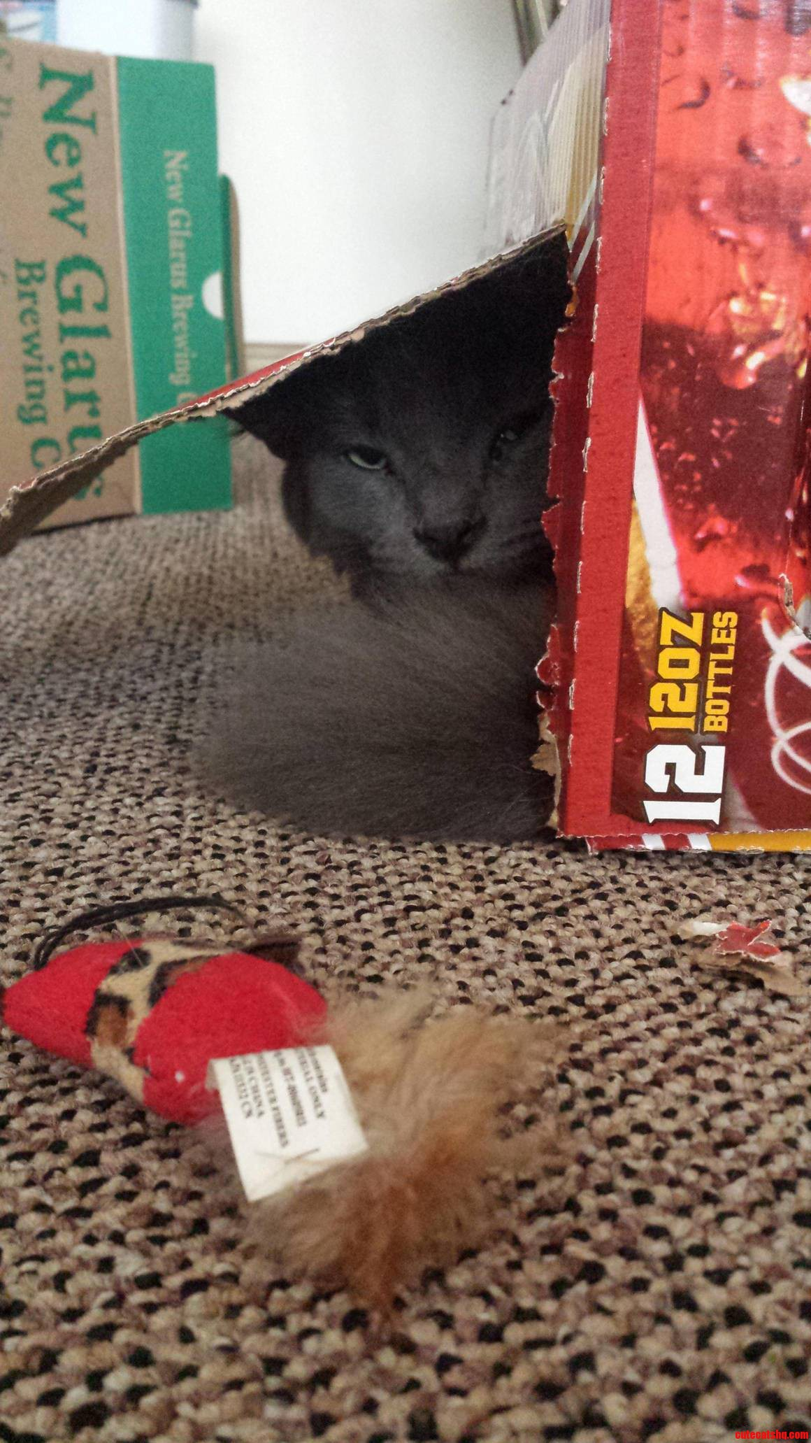 He Does Not Like Being Interrupted During Box Time.