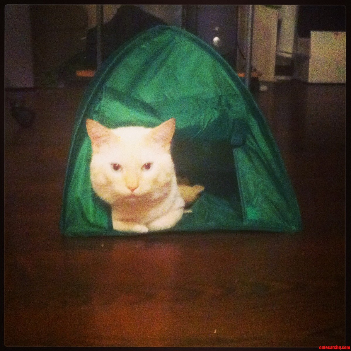 Kitty Likes To Camp.