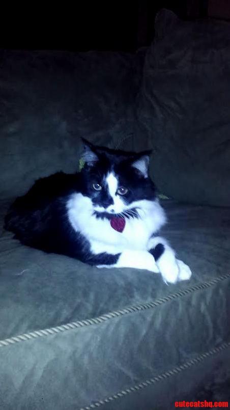 Meet Maxine. The Proper Kitty.