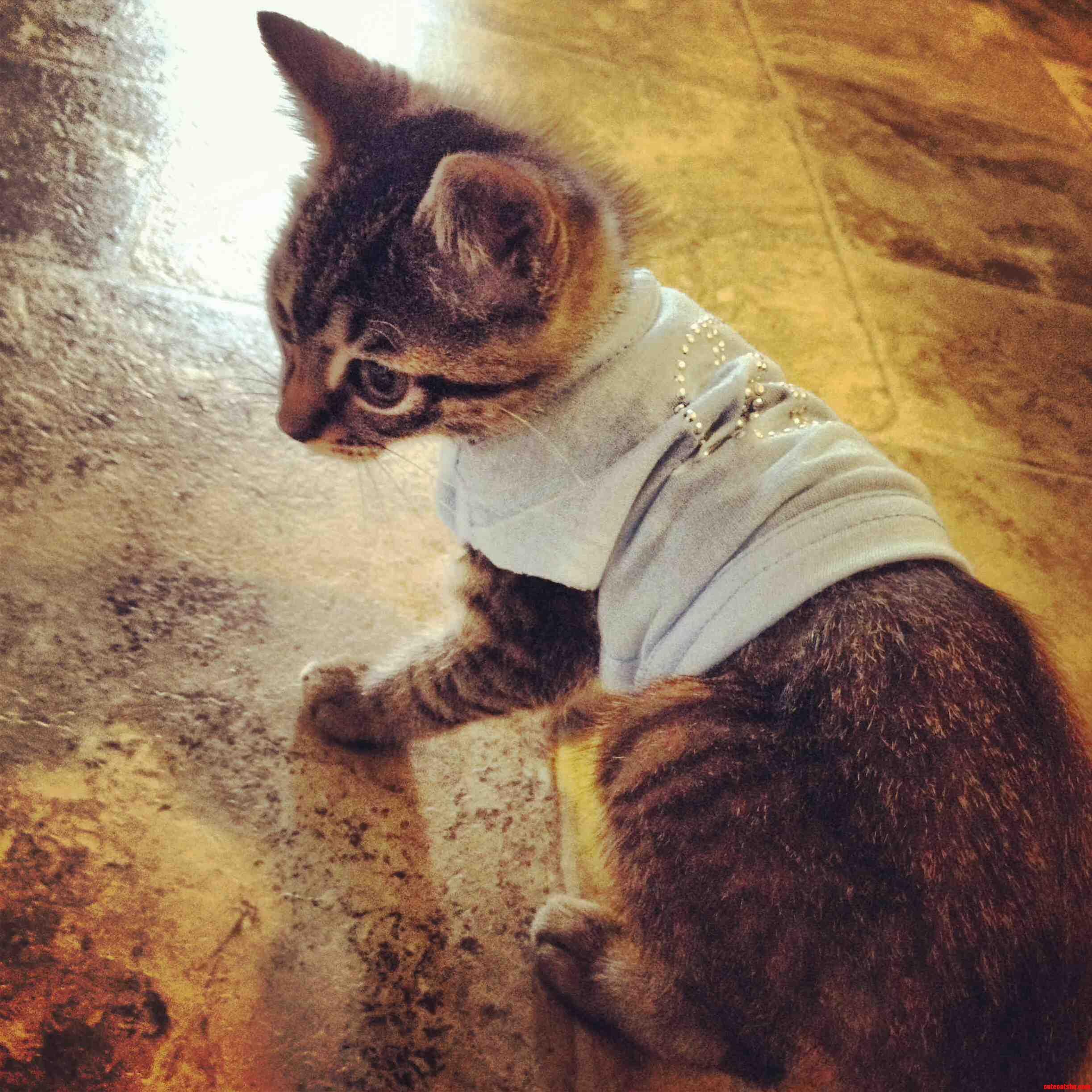 Meet Mister cat