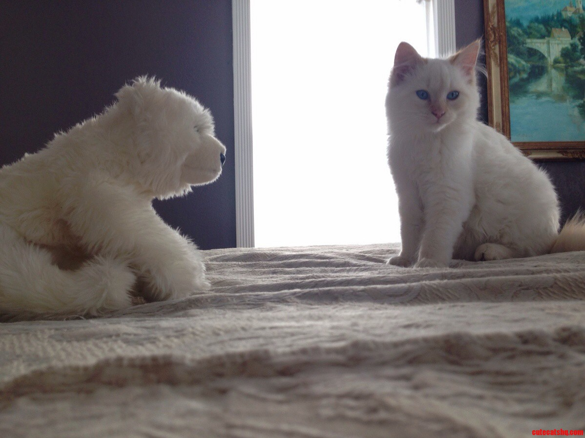 Meet Nymeria