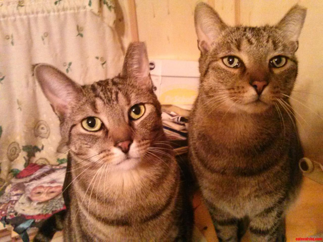 Meet Sissy And Buckethead.