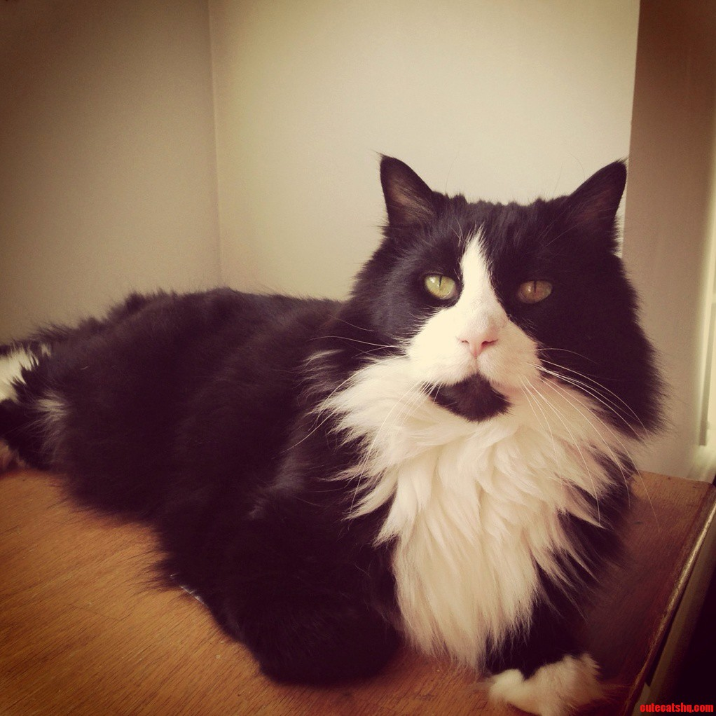 My Beautiful Kitty On His 9Th Birthday