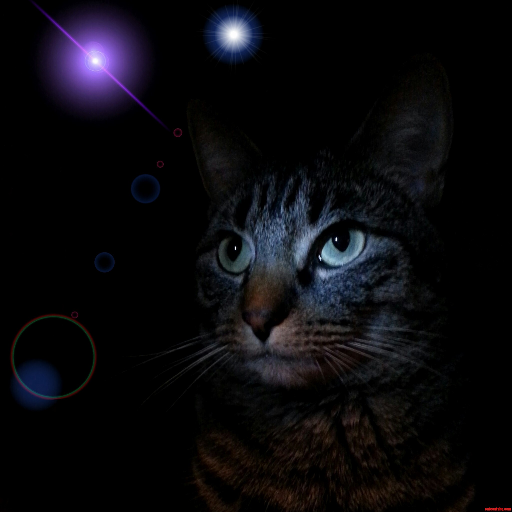 My Cat Annie Contemplating The Wonders Of Space