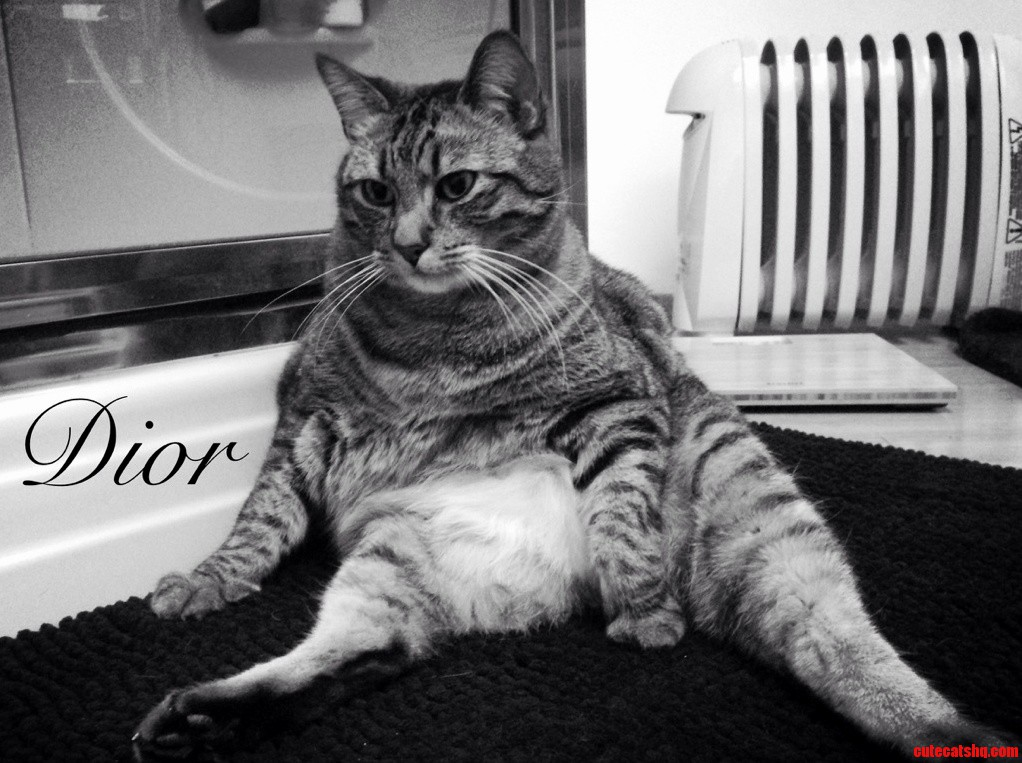 My Cat Is Diors New Kitty Line Model.