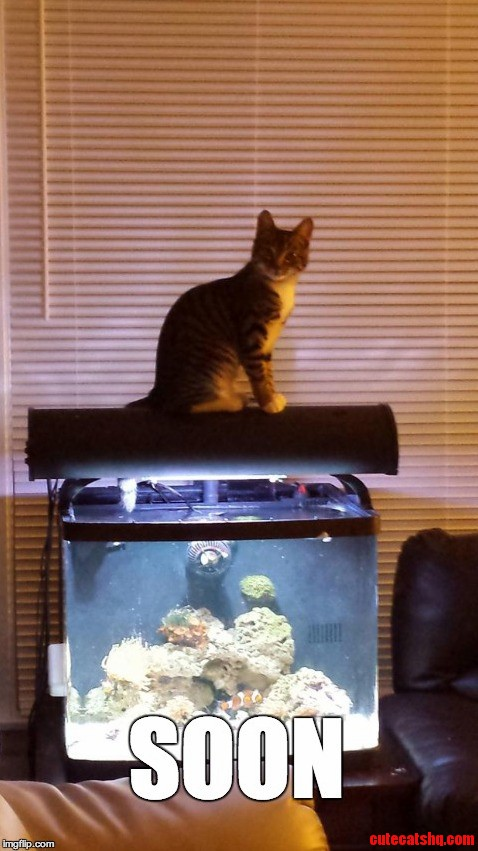 My Cat Is Learning To Fish In My Living Room